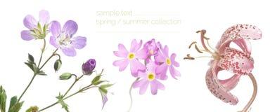 Del resorte de la flora cierre para arriba Imagen de archivo
