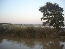 Del rio Riachuelo da costela Fotos de Stock Royalty Free