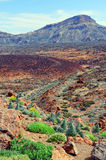 Del teide national park with its volcanic landscape. Stock Photos