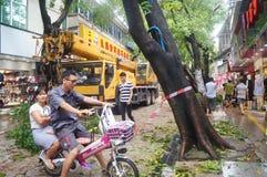 Del tifón del soplo árboles abajo Imagen de archivo