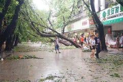 Del tifón del soplo árboles abajo Foto de archivo libre de regalías