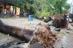 Del tifón del soplo árboles abajo Fotos de archivo libres de regalías