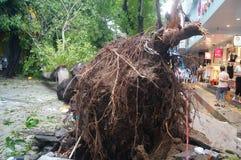Del tifón del soplo árboles abajo Foto de archivo