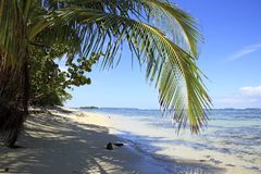 Del tropical Toro de Bocas de la playa Fotografía de archivo libre de regalías