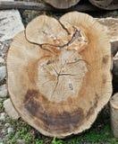 Delad upp trädstam Royaltyfri Bild