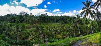 Delagoan-Terrasse, Ubud, Bali, Indonesien Stockfotografie