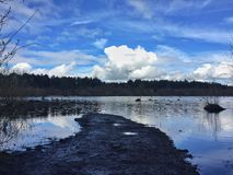 Delamere forest Royalty Free Stock Photos