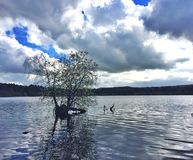 Delamere forest lake Stock Photo