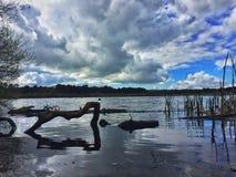 Delamere skogsjö Fotografering för Bildbyråer