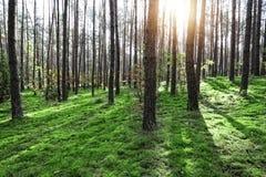 Delanteras soleadas y verdes Foto de archivo libre de regalías