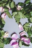 Delar av en rosa växt arkivbilder