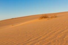 Delat fotografi på två del vid sand och himmel Länder och panoramabakgrund Hållbart ekosystem Gula dyn på Royaltyfri Fotografi