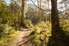 Delatite River Trail at Mt Buller Stock Photos