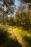 Delatite River Trail at Mt Buller Royalty Free Stock Photo