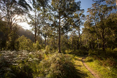 Delatite River Trail at Mt Buller Royalty Free Stock Image