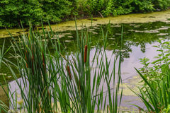 Delaware Canal Towpath and bulrush, Historic New Hope, PA. USA Stock Photography