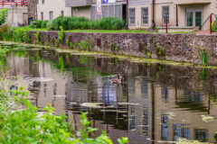 Delaware Canal Towpath and goose, Historic New Hope, PA. USA royalty free stock images