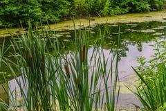 Delaware-Kanal-Leinpfad und Binse, historische neue Hoffnung, PA Stockfotografie