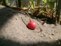 Delecius еды плодоовощ Chery стоковое фото rf