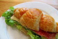Delectable ham and cheese with fresh lettuce croissant sandwich. Texture Background stock images