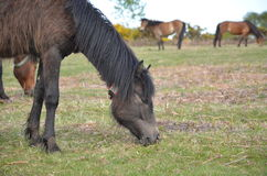 Deleitando os cavalos 2 imagem de stock royalty free