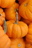 Deleite de Halloween Fotografia de Stock Royalty Free
