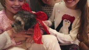 Deleite do Natal dos cães video estoque