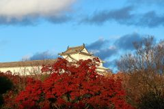 Delen av byggnad på den Himeji slotten som ut ser från sida med det röda höstträdet och bakgrund för blå himmel Royaltyfria Bilder