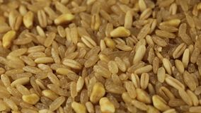 Deletreado, arroz y cebada almacen de video