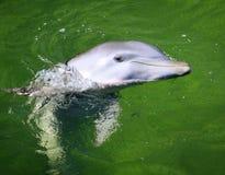 Delfín imágenes de archivo libres de regalías