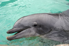 Delfín Fotos de archivo libres de regalías