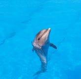 delfín Foto de archivo