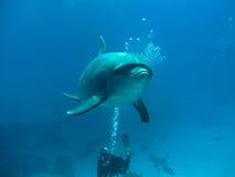 delfín Fotos de archivo