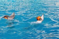 Delfín con la bola Imágenes de archivo libres de regalías