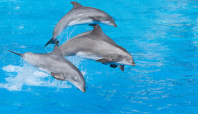 Delfín de Bottlenose Fotos de archivo