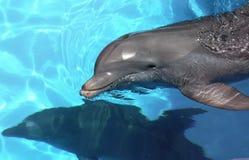Delfín de la República Dominicana de Punta Cana foto de archivo