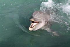 Delfín de Playfull imagen de archivo