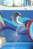 Delfín de salto Foto de archivo