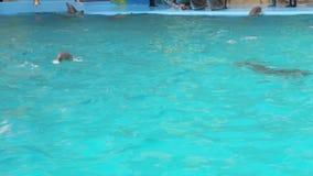 Delfín del bebé en la piscina almacen de metraje de vídeo
