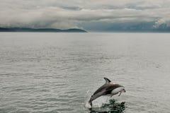 Delfín echado a un lado blanco pacífico foto de archivo