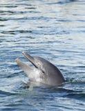 Delfín en agua Fotos de archivo