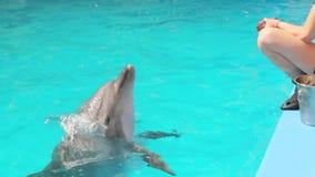 Delfín en el cierre de la piscina para arriba
