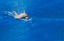 Delfín en el parque del agua Foto de archivo