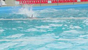 Delfín entrenado en la piscina almacen de metraje de vídeo