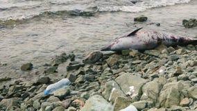 Delfín muerto en la playa después de la tormenta almacen de metraje de vídeo