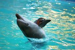 Delfín que juega con una bola Fotos de archivo libres de regalías
