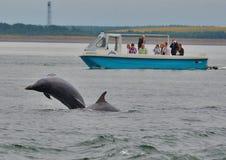 Delfín y barco de Bottlenose Fotografía de archivo libre de regalías