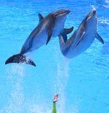 Delfínes Foto de archivo