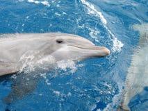 Delfínes Imagen de archivo