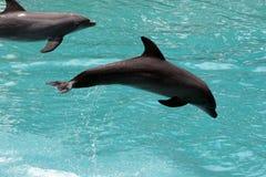 Delfínes Imágenes de archivo libres de regalías